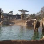 elephant-odysee-150x150